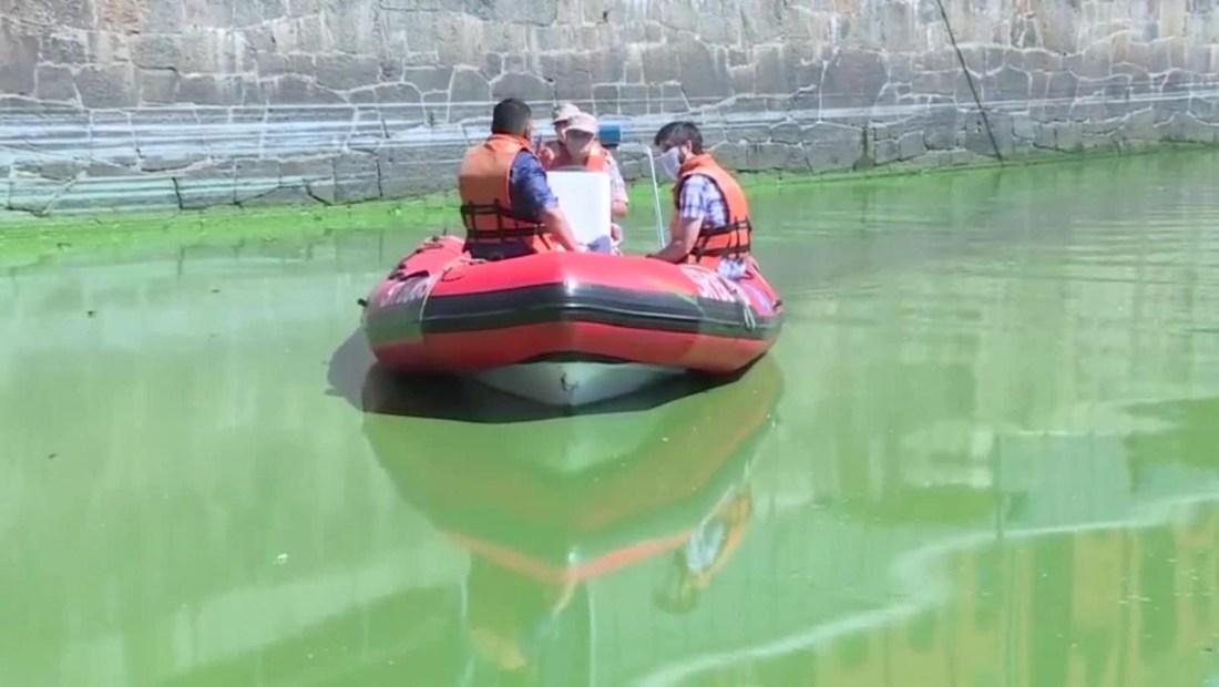 Se torna verde el agua de Puerto Madero en Buenos Aires