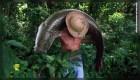Salvan en Brasil al gigantesco pez arapaima