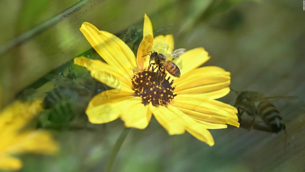 Científicos crean el primer mapa global de abejas
