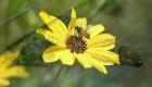 Los científicos crean el primer mapa global de abejas