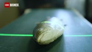 La tecnología podría mantener más peces en el mar