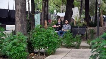 México despenaliza la marihuana y la sociedad reacciona