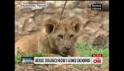 Los nuevos integrantes del Zoológico del Altiplano