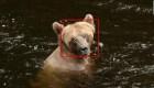 Reconocimiento facial para osos y vacas