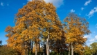 Los árboles perderían sus hojas por la crisis climática