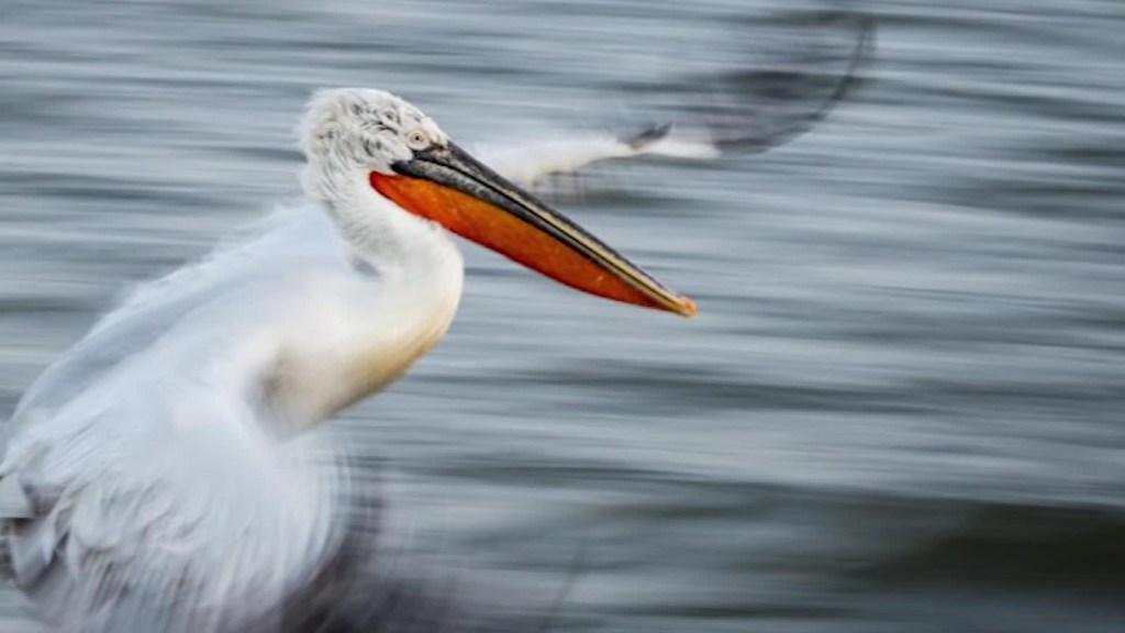 Las mejores fotos de la naturaleza en 2020