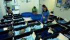 Trasladan a 40 tortugas a la Florida