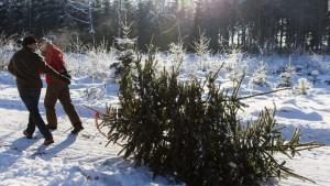 Bosques de EE.UU. invitan a cortar tu árbol de Navidad