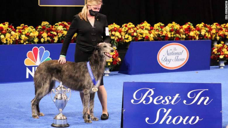 Claire, un lebrel escocés, gana el primer premio en el National Dog Show 2020