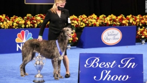 perro National Dog Show