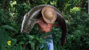 amazonas-pez-terminator-arapaima