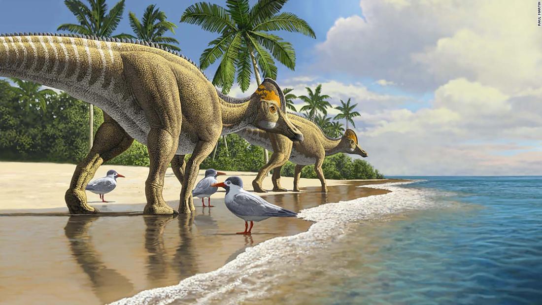 Los Dinosaurios Viajaron A Traves De Los Oceanos Sugiere Descubrimiento Somos la tienda online de habla hispana más especializada en productos relacionados con los dinosaurios, ¡si buscas cualquier cosa relacionada con ellos aquí la encontrarás! los dinosaurios viajaron a traves de