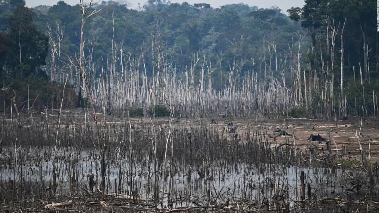Alarmante cifra de deforestación en la Amazonía brasileña