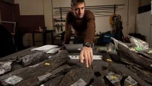 Presentan un raro fósil de triceratops