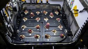 La NASA cosecha rábanos espaciales