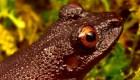 Científicos encuentran 20 nuevas especies en Bolivia