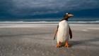El iceberg que amenaza una isla llena de pingüinos