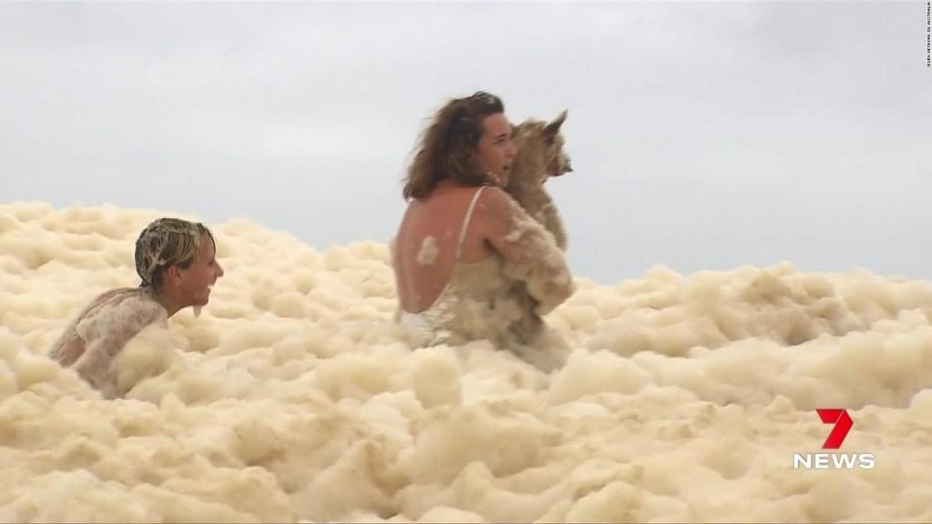 Perro se pierde bajo la espuma marina
