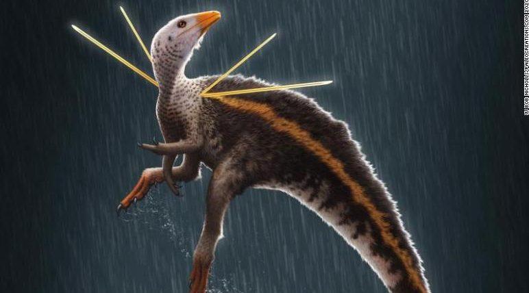 Brasil: hallan fósil de dinosaurio posiblemente emplumado
