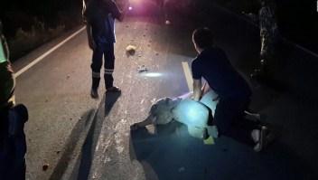 Paramédico reanima a bebé elefante que fue arrollado