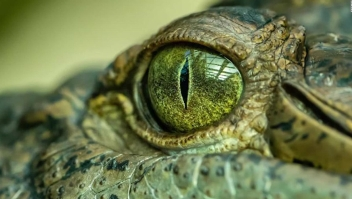 Identifican cocodrilo prehistórico en Australia