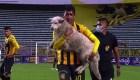 Un perro protagoniza juego del fútbol boliviano