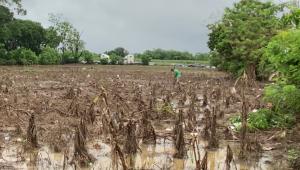 Centroamérica sin comida ni agua por huracanes y pandemia