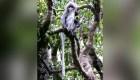 Museo de Historia Natural describe 503 nuevas especies