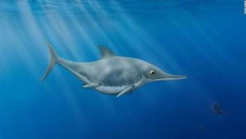Nueva especie de 'dragón marino' descubierta por un cazador de fósiles aficionado frente a la costa inglesa