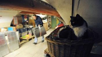gatos museo
