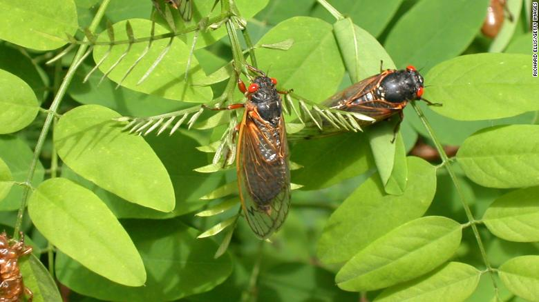 insectos 2020