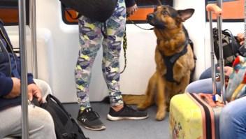 viajar-con-animales-de-apoyo-emocional