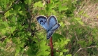 Biologists reveal how butterflies fly