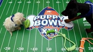 Todo listo: regresa el Puppy Bowl