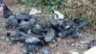 Nuevo brote de gripe aviar en la India