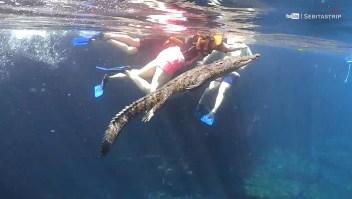 Te contamos la historia de 'Panchito' el cocodrilo viral en TikTok