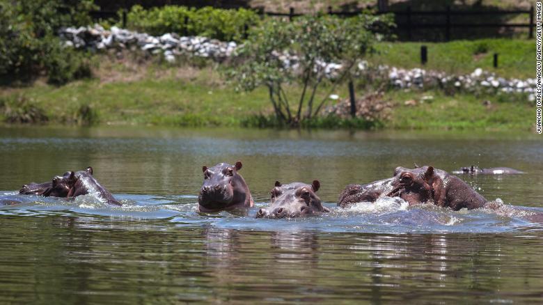 Hipopótamos Escobar