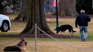 Así disfrutan en la Casa Blanca los perros de Biden