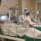 """Médicos peruanos dicen vivir """"una pesadilla"""" por la pandemia"""