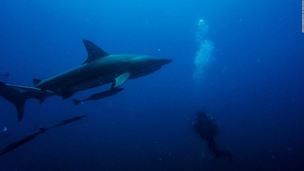 ¿Cuál es el país con más ataques de tiburones en el mundo?
