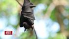Murciélagos, el misterio detrás del covid-19