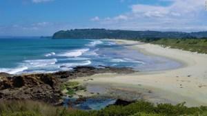leones-marinos-nueva-zelandia