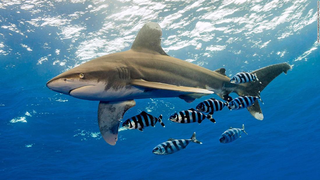 tiburones-rayas
