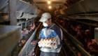 Gripe H5N8: qué es, cómo se contagia y cómo prevenirla
