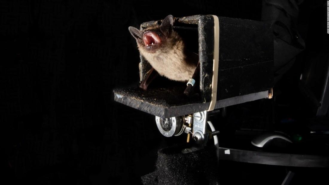 Encuentran murciélagos en zona urbana de Ciudad de México