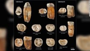 Fósiles de dientes sugieren mezcla de humanos y neandertales