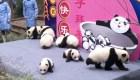 Los pandas que se adelantan a la primavera en China