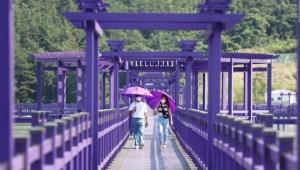 Isla púrpura en Corea del Sur atrae turistas