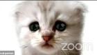 Aparece con filtro de gatito ante corte virtual en Zoom