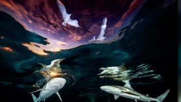 Esta es la imagen ganadora del premio Fotógrafo Submarino 2021